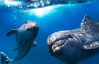 Познавательная  программа «День китов и дельфинов»