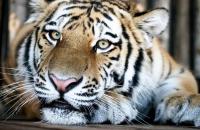 Познавательная программа «Международный День тигра»